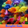 Bright fish 5 Differences