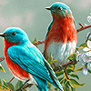 Colorful brooding birds puzzle