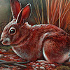 Red tame rabbits puzzle