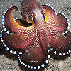 Star octopus slide puzzle
